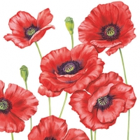 Cocktail Servietten Romantic Poppy