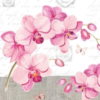Servietten 25x25 cm - Orchids With Love