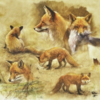 Servietten 33x33 cm - Portraits Of Foxes