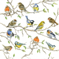 Servietten 33x33 cm - Birds Meeting