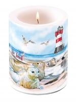 Kerze Candle Big Seals On The Beach