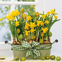 Cocktail Servietten Daffodils