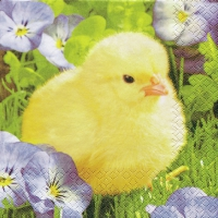 Servietten 33x33 cm - Fluffy Chick