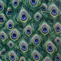 Lunch Servietten Peacock Feathers