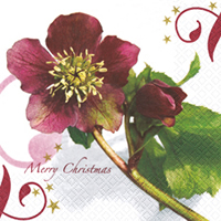 Servietten 33x33 cm - Christmas Rose