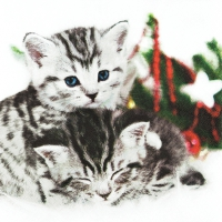 Servietten 33x33 cm - Christmas Cats