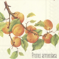 Servietten 33x33 cm - PRUNUS ARMENIACA cream
