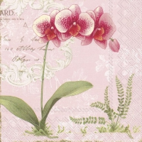 Servietten 33x33 cm - L´ORCHIDÉE light rose