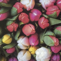 Servietten 33x33 cm - TULIPS BOUQUET