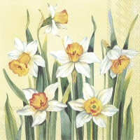 Servietten 33x33 cm - WHITE NARCISSUS yellow