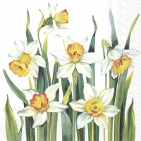 Servietten 33x33 cm - WHITE NARCISSUS white