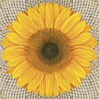 Servietten 33x33 cm - Sunflower on Seeds
