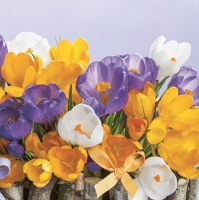 Servietten 33x33 cm - Collection of Crocuses