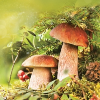 Lunch Servietten Couple of Boletus