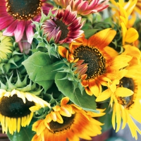 Servietten 33x33 cm - Sunflower Bouquet