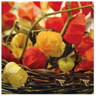 Lunch Servietten Physalis of Autumn