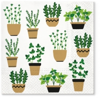 Napkins 33x33 cm - Herbs in Pot
