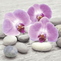 Lunch Servietten Orchids on stones