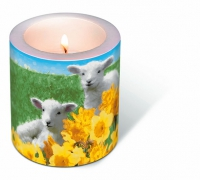 Dekorkerze Candle Cute lambs