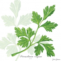 Servietten 33x33 cm - Parsley