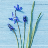 Servietten 33x33 cm - Blue Flowers