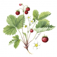 Servietten 25x25 cm - Wild Strawberry