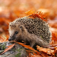 Lunch Servietten Cute Hedgehog
