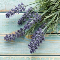Lunch Servietten French Lavender