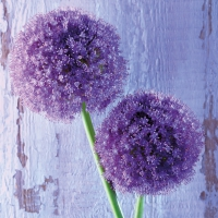 Servietten 33x33 cm - Purple Allium