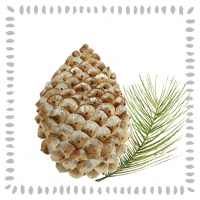 Cocktail Servietten Pine Cone nature