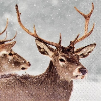 Servietten 33x33 cm - Red Deers in Winter Scene