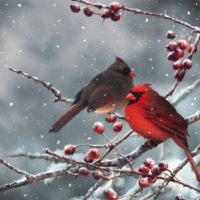 Lunch Servietten Cardinal Birds on snowy Branch
