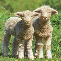 Servietten 33x33 cm - Cute Lambs