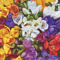 Servietten 33x33 cm - Variety of Freesias