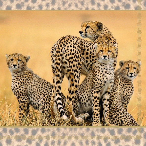 20 Servietten - 33 x 33 cm CHEETAH FAMILY,  Regionen - Afrika,  Regionen -  Sonstige,  Tiere -  Sonstige,  Everyday,  lunchservietten,  Leopard in der Savanne