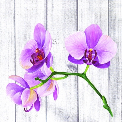 20 Servietten - 33 x 33 cm SINGLE ORCHID,  Blumen - Orchideen,  Everyday,  lunchservietten