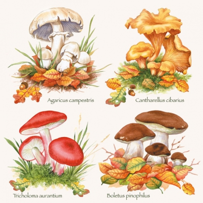 Lunch Servietten COLLECTION MUSHROOMS