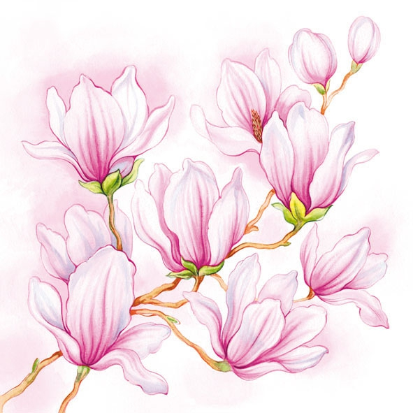 Servietten 25 x 25 cm,  Blumen - Magnolien,  Everyday,  lunchservietten,  Magnolien