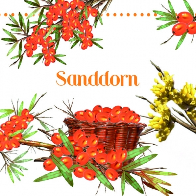 Servietten nach Motiven,  Früchte -  Sonstige,  Everyday,  lunchservietten,  Sanddorn