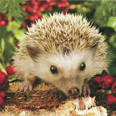 20 Servietten - 33 x 33 cm Barnie,  Tiere - Igel,  Everyday,  lunchservietten