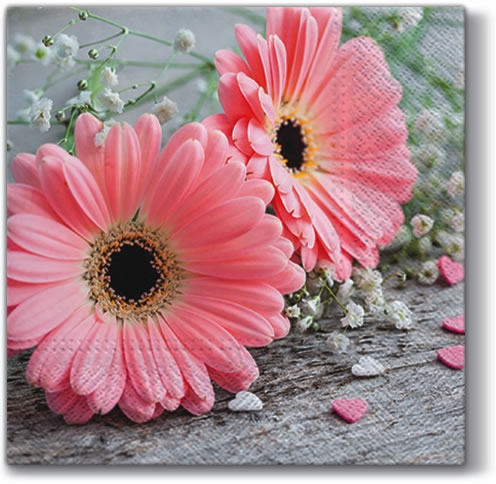 Servietten 33 x 33 cm,  Blumen -  Sonstige,  Everyday,  lunchservietten,  Gerbera