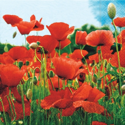 20 Servietten - 25 x 25 cm Field of poppies,  Blumen - Mohn,  Everyday,  cocktail servietten