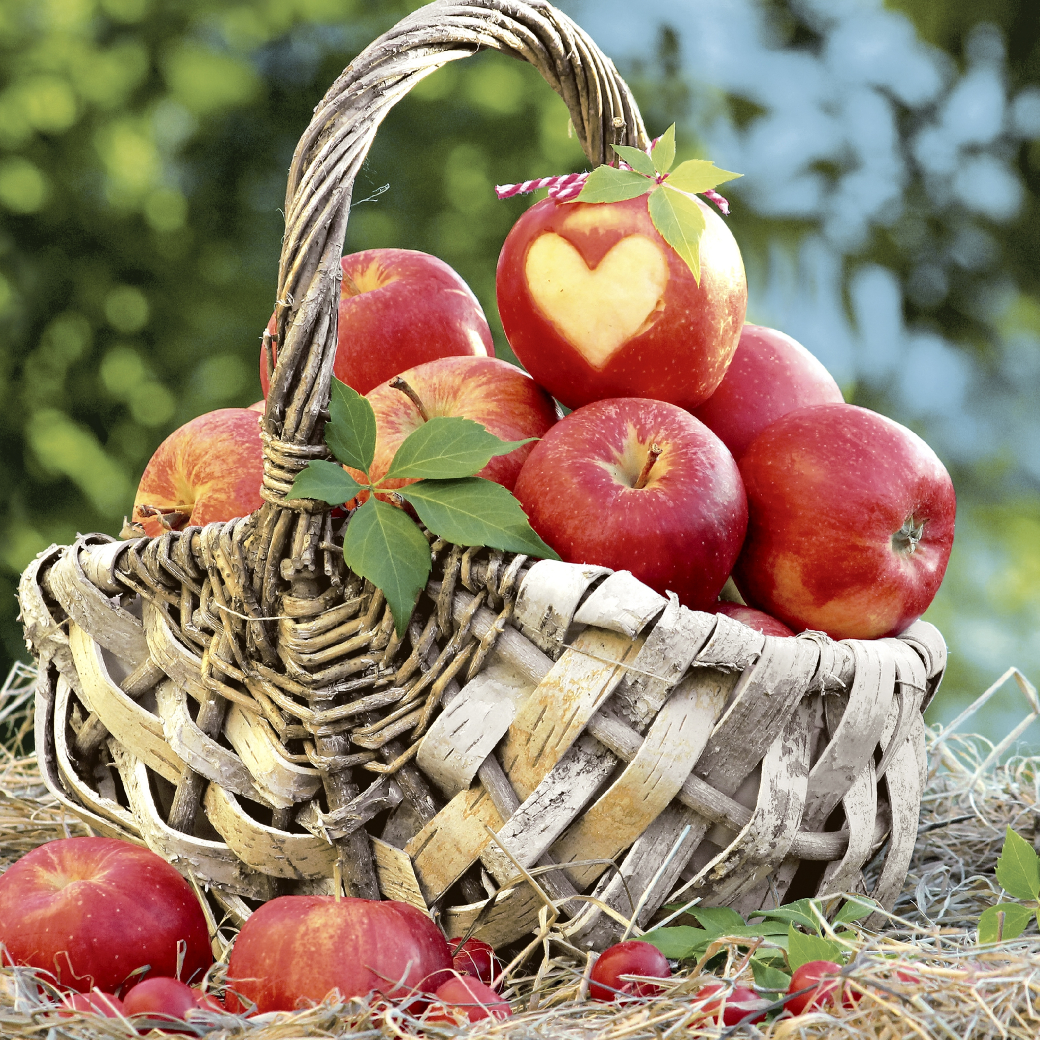 Servietten 33x33 cm - Apple basket